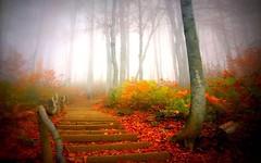 مه رقيق پاييزى (armanazad111) Tags: پاييز البوم