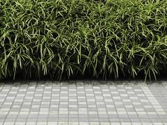 on the way (maxx kia) Tags: street city grass tile bush sidewalk tiles pedestrianwalk