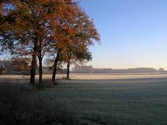 Nov 26, 2013 (erix!) Tags: autumn trees field landscape hoarfrost herbst feld bluesky landschaft ruhrgebiet ef lowsun lautomne datteln
