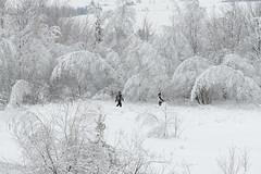 Snow! Snow! Snow! (guysamsonphoto) Tags: winter white snow hiver neige blanc victoriaville victo montarthabaska nikond600 centreduquébec fabuleuse guysamson nikkor70200f4g potd:country=fr