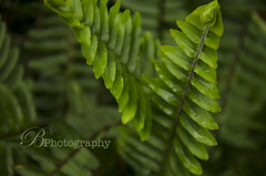 (BPhotography_) Tags: ocean sea plants tree green love boyfriend nature water sunshine birds creek fun photography bay pier moss dock stream warm berries state florida documentary like spanish ferns canopy bog facebook