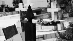 Cementerio - Cemetery (Danferpizarro) Tags: chile bw white black flores color blanco luz canon de point la coquimbo calle shot y monumento negro bicicleta bn iso perro cruz gato vida caminar balance animales juego region iv siempre por recuerdos blancos exposicin ahp compacta sx160 danferpizarro