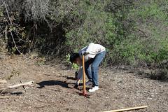 Volunteer (Weeding Wild Suburbia) Tags: spnp