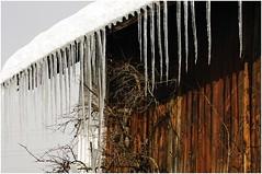 Winterweiss : Schnee & Eis ( eulenbilder - berti ) Tags: schnee winter eis dach eiszapfen stadl stallgebude stadldach