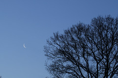 Crescent Moon and Venus (ejwwest) Tags: moon venus elements