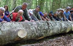 Sistemazione del tronco