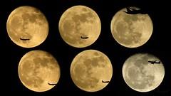 Moon and plane. (Nature Respect Love) Tags: moon nature night plane airplane orlando florida space fullmoon fl avión greatnature moonandplane lunartics nightflights flyinginfrontofthemoon