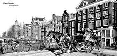 Amsterdam - Holanda (Tecci Gavidia) Tags: amsterdam playa perro holanda perros amstel tecci teccigavidia