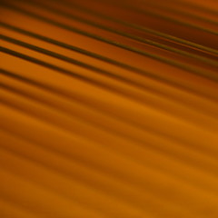 strength (Cosimo Matteini) Tags: music abstract pen square warm dof piano olympus strings strength tension rhythm shallowdof pianoforte m43 mft 45mmf18 ep5 mzuiko cosimomatteini