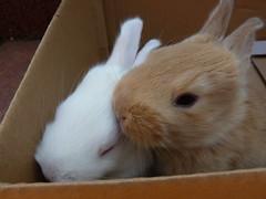 More Rabbits (cangaroojack) Tags: baby rabbit bunny bunnies babies young rabbits hase junge kaninchen hschen hasen