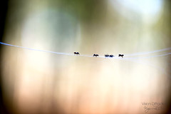 Young Tightrope walkers ((Virginie Le Carré)) Tags: macro spider shadows bokeh ombre araignée minimalime