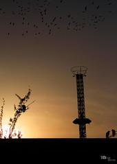 Sunset (Tolga ŞEVİK) Tags: park family light sunset orange sun sunlight black bird tower love silhouette yellow fun amusement fly reverse ters kulesi ışık adalet karartı