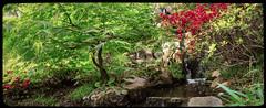 Pano source Dxo poesie LM 296_297 (mich53 - Thanks for 2300000 Views!) Tags: flowers france garden aqua zen dxo waters paysage source panoramique boulognebillancourt posie jardinjaponais paisible jardinalbertkahn summiluxm35mmf14asph leicamtype240