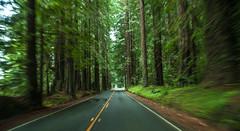 Season (bior) Tags: trees travelling northerncalifornia highway driving redwood redwoodtrees redwoodtree redwoodforest avenueofthegiants 24105l ef24105mmf4lisusm canoneos5dmarkii 5d2 eos5dmarkii