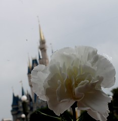 Eighty-Six (MediumHero6) Tags: world street anna castle face fairytale hall princess florida character magic main parks kingdom disney parade aurora cinderella wdw waltdisneyworld walt electrical meet elsa mk greet cinderellas