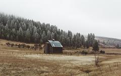 In Silence (John Westrock) Tags: barns rural farm trees fog foggy easternwashington pacificnorthwest nature landscape scenery scenic canoneos5dmarkiii pwlandscape canonef2470mmf28lusm washington johnwestrock