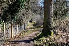 Nature's Path (DaveJC90) Tags: