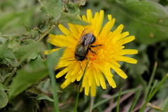 IMG_2312 (haileeparker) Tags: sad bees disappear