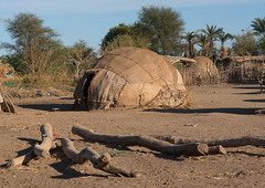 Traditional afar tribe village, Afar region, Afambo, Ethiopia (Eric Lafforgue) Tags: poverty africa wood house color tree home nature horizontal outdoors photography day village african muslim poor property nobody nopeople hut homemade simplicity housing nomad homestead ethiopia acacia arid mats developingcountry primitive lifestyles hornofafrica afar nomadic eastafrica burra abyssinia greatriftvalley ruralscene fulllenght nonurbanscene danakil indigenousculture africanculture ovalshaped afarregion builtstructure residentialstructure afambo ethio162374