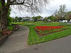 Tulip Service (Bricheno) Tags: scotland glasgow escocia botanicgarden westend szkocja botanicgardens schottland scozia cosse  esccia   bricheno scoia