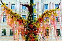 Phoenix (Poupetta) Tags: flowers phoenix finland helsinki esplanade