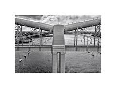 T for Tamar (silver/halide) Tags: bridge blackandwhite bw monochrome mono cornwall victorian devon d750 tamar kernow gwr isambardkingdombrunel saltash greatwesternrailway johnbaker rivertamar