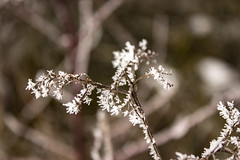 Eisschnheit (Tech-Nic) Tags: winter makro eiskristalle kitobjektiv epos600d