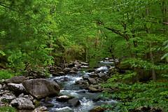 Tremont and Middle Prong 055 (wildrosetn39) Tags: water outdoors stream rocky littleriver greatsmokymountainnationalpark naturemasterclass tremontandmiddleprong