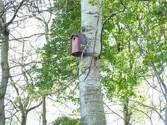 Nummer 17, de laatste mezsenkast hangt (Peter van den Akker) Tags: leiden vogels natuur oostvlietpolder natuurbeheer vogelhoff
