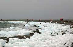 Yankee Harbor, Antarctica (trphotoguy) Tags: antarctica antarcticpeninsula yankeeharbor