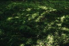 (esmhs) Tags: light sun sunlight green nature grass forest moss woods