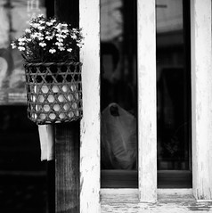 Flower bascket (Leiroha) Tags: blackwhite d76 acros100 selfdevelopment rolleiflex35fplanar