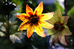 2016-06-21 In the garden (Mary Wardell) Tags: flowers summer flower composite photoshop canon glow 60d