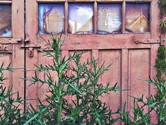 weeds & vine (@jnathanson) Tags: toronto alleys bloorcourt hipstamatic