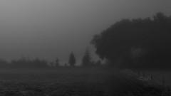A Misty Morning (Netsrak) Tags: morning trees bw white mist black tree nature grass fog fence dark way de landscape deutschland grey blackwhite spring nebel darkness path natur meadow wiese eerie eifel gras schwarzweiss zaun landschaft weiss bume morgen baum schwarz nordrheinwestfalen dunkel weg frhling dunkelheit rheinbach hff gruselig weis schwarzweis