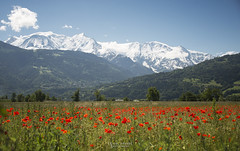 Mont Blanc amongst a field of poppies. (God_speed) Tags: mountain france alps switzerland swiss peak chamonix mont blanc montblanc frenchalps