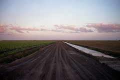 (patrickjoust) Tags: hendrycounty florida fujicagw690 fujicolorpro160ns 6x9 medium format 120 rangefinder 90mm f35 fujinon lens manual focus analog mechanical patrick joust patrickjoust south fl usa us united states north america estados unidos autaut farm field sugar cane clouds canal farming rural sticks dirt road tracks sunset dusk