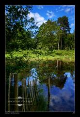 Stover Reflections (jeremy willcocks) Tags: uk trees sun lake colour reflection fence landscape woods fuji sunny devon stover countrypark xt10 jeremywillcocks xf1024 wwwsouthwestscenesmeuk
