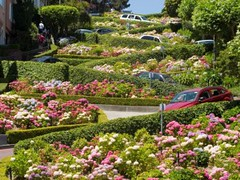 6 (wanghongsheng56) Tags: street houses plants streets flower tree cars car america lights climb coast view hill scene tourists downhill hills vista historical elevation asphalt russian residential coit height crooked lombard attraction steep crookedest