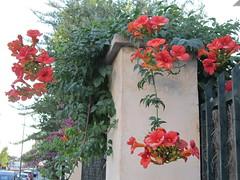 flower (waldemarjan) Tags: majorka flower