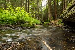 Bachlauf im Fichtenwald (Stephanie Mnner Photography) Tags: wasser wasserfall outdoor pflanzen bach fluss landschaft wald strom farn pfad flussbett heiter
