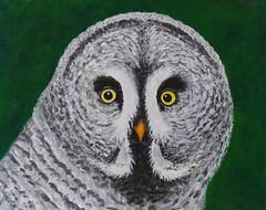 Uil acrylverf (Olga and Peter) Tags: paint owl acryl verf uil fp1120131