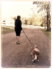 out for a walk (ladybugdiscovery) Tags: dog path walk hound basset bassethound nutmeg