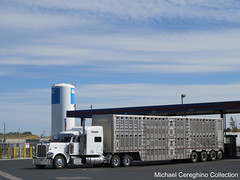 Sale Trucking LLC Peterbilt 389 with 4 axle bullwagon, Truck #28 (Michael Cereghino (Avsfan118)) Tags: livestock bullwagon bull wagon peterbilt model pete 389 quad axle 4 trailer cattle hauler semi trucking sale llc