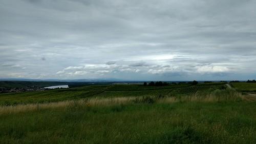 Blick auf den Rhein Richtung Norden