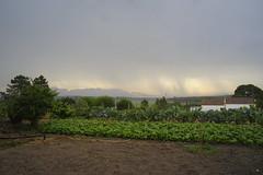 morning rain (Capturedbyhunter) Tags: morning portugal rain k de landscape pentax 28mm chuva paisagem santarm fernando vero 35 marques smc f8 trovoada manh k1 ribatejo coruche caador fajarda