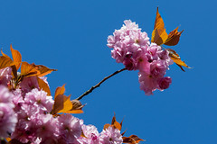 clingendael-7718 (Arie van Tilborg) Tags: japanesegarden hague thehague clingendael japansetuin clingendaelestate landgoedclingendael arievantilborg