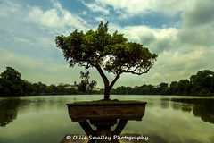 Bonsai Tree (Ollie Smalley Photography  Travelling) Tags: travel blue lake tree travelling green water clouds canon reflections eos vietnamese shadows view bokeh small central bluesky mini highlights vietnam ii bonsai vegetation vista getty reflective 5d hanoi ornamental foilage hdr highdynamicrange gettyimages hdri plantpot osp ngocsontemple gapyear travelphotography cloudage templegardens placeofinterest 5d2 canon5dmarkii bonsiatree olliesmalleyphotography
