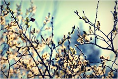 (davespilbrow) Tags: morning flowers light sky plant flower color tree green nature floral beautiful beauty grass horizontal illustration studio landscape botanical outdoors countryside daylight leaf petals spring stem flora scenery colorful branch seasons natural bright blossom bokeh gardening outdoor vibrant space seasonal softness blossoms decoration lawn grow tranquility sunny row fresh petal growth zen twig bloom backdrop romantic environment botanic growing blossoming bud chic pollen agriculture delicate botany idyllic isolated tenderness freshness budding springtime blooming flourishing
