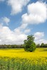 Colours of Summer (David.Owens) Tags: uk blue trees summer sky green yellow clouds sussex countryside westsussex bloom fields colourful rapeseed kingleyvale 2013 18135mm davidowens canoneos7d weststoke davidophotography